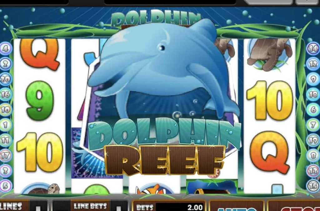 dolphin-reef-918kiss